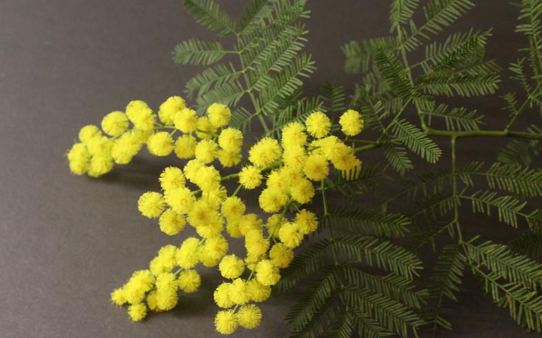 Festa della DONNA….regalati una mimosa….